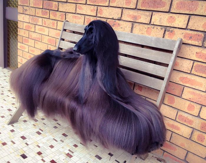 サラサラな毛並みの犬1