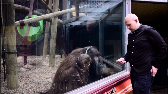 動物園でマジック、オランウータン1