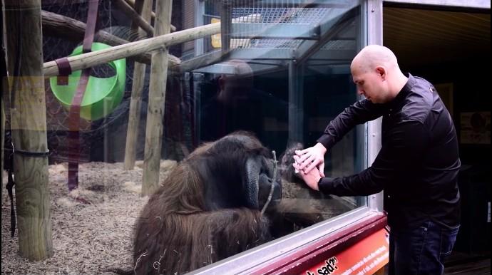 動物園でマジック、オランウータン3