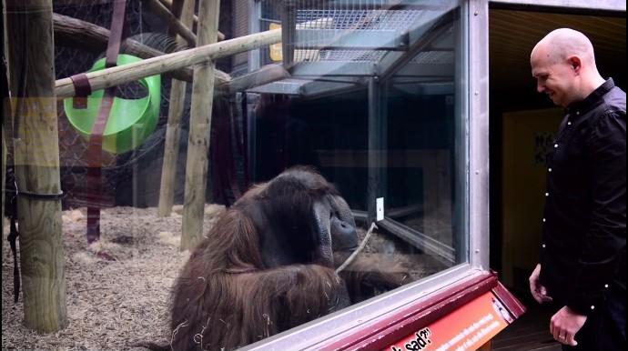 動物園でマジック、オラウータン4
