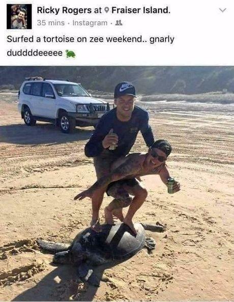 カメでサーフィン