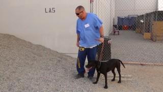 犬と受刑者