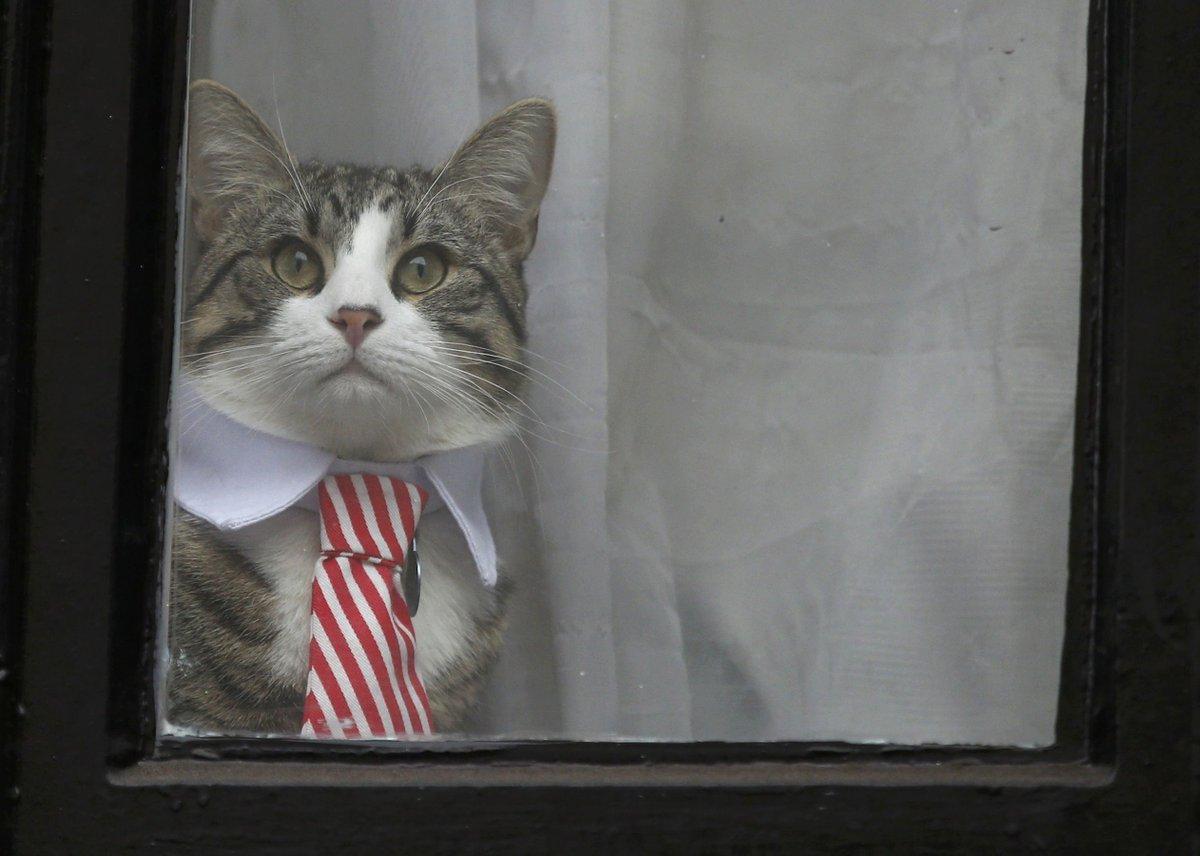 エクアドル大使館の猫1