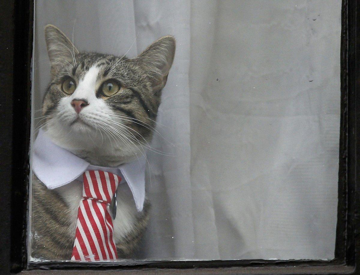 エクアドル大使館の猫3