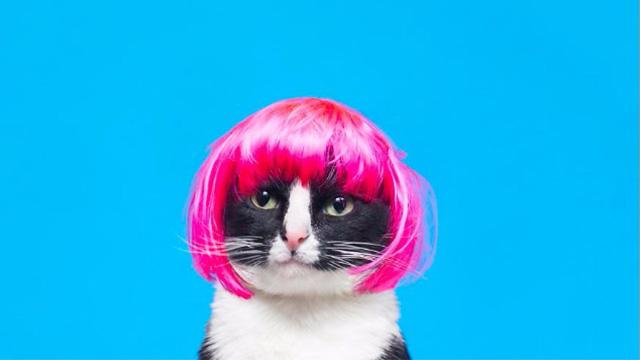 NYで話題の猫「チート姫」お洒落でかわいいインスタグラムを紹介!のアイキャッチ