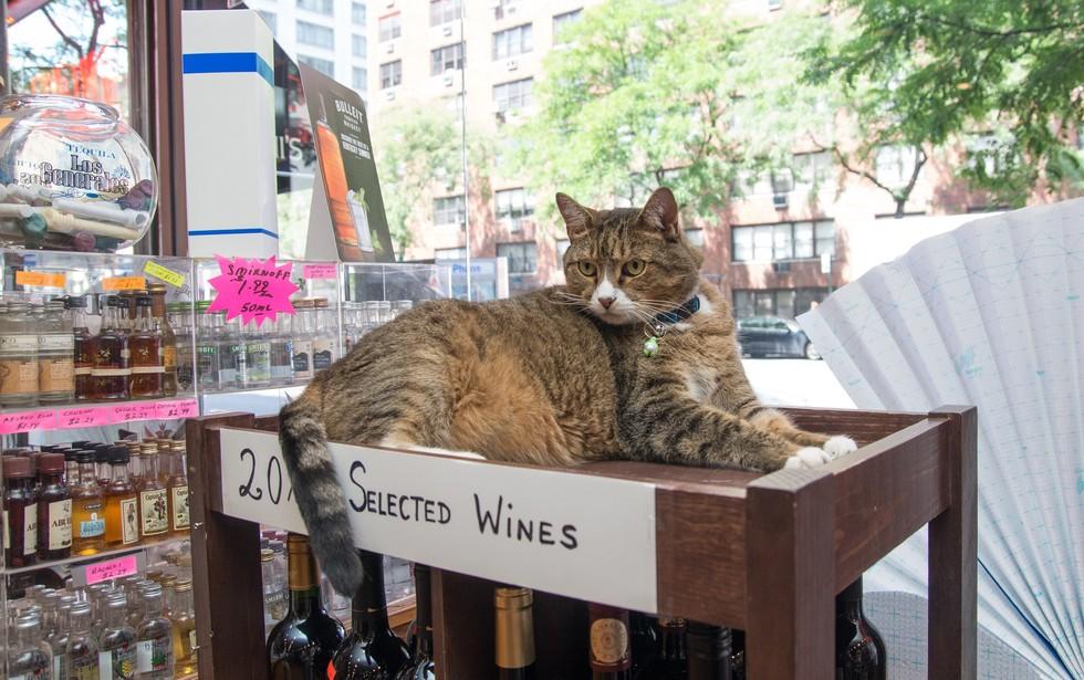 ニューヨークの看板猫6