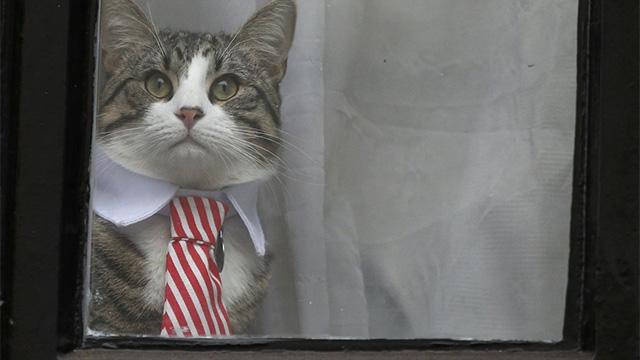 「ネクタイで正装」大使館の猫、強姦容疑の飼い主に集まった報道陣を釘付けに!のアイキャッチ