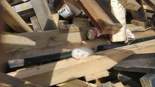 木材に埋もれた子猫1