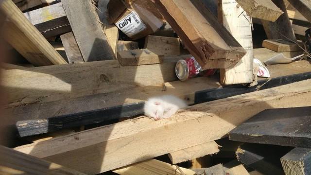 廃材置き場から聞こえる「ニャー」という鳴き声。木材の山の中には生まればかりの猫の赤ちゃんが!のアイキャッチ