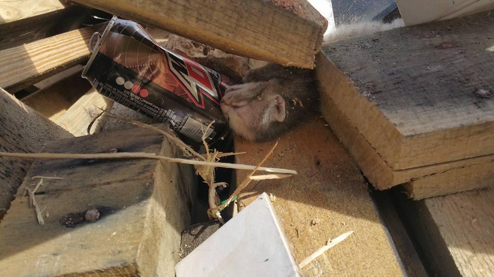 木材に埋もれた子猫2