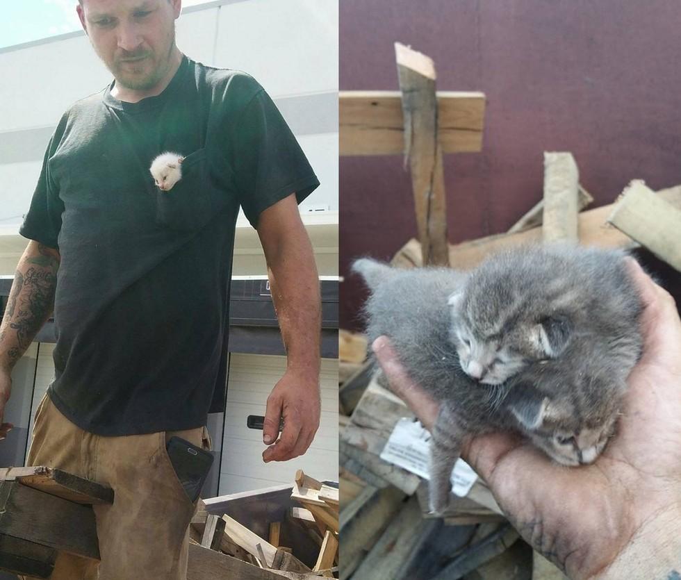 木材に埋もれた子猫4