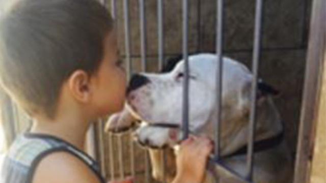 カナダでイヌ駆除の法律が成立…多くの人たちがイヌの命のために動くのアイキャッチ