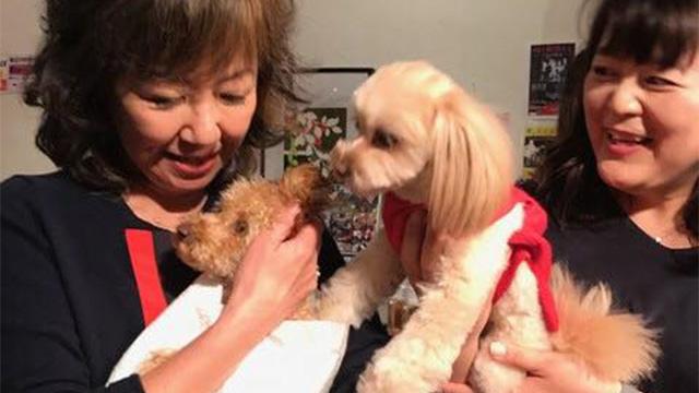 浅田美代子さん「保護犬猫という選択を。」障害のある犬猫のペット里親会に注目集まるのアイキャッチ