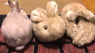 ウサギスリッパ