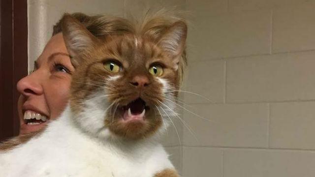 恋に落ちた人は数時間で30人!可愛すぎる保護猫・ピーター、あふれる魅力でほかの猫たちの縁結びまで!のアイキャッチ