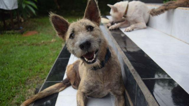 バリ島で出会ったイヌがきっかけで、動物のための財団を作ってしまう!ある男性の行動力に、胸が熱くなるのアイキャッチ