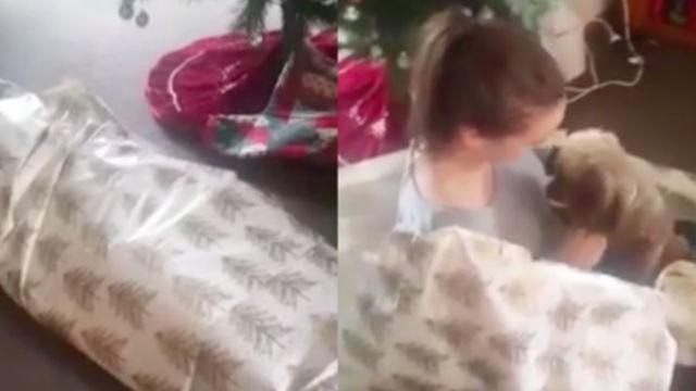 最高のプレゼント!犬がクリスマスプレゼントの包み紙を開けると…?!のアイキャッチ
