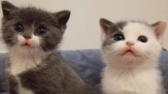 大雪の中、救出された野良の子猫2匹…愛情たっぷりの家でスクスク育つのアイキャッチ