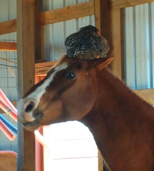 馬とニワトリ1