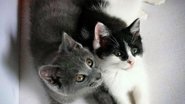 もう離さにゃい? ぎゅっと抱き合う子猫たちが可愛すぎてとろける!のアイキャッチ