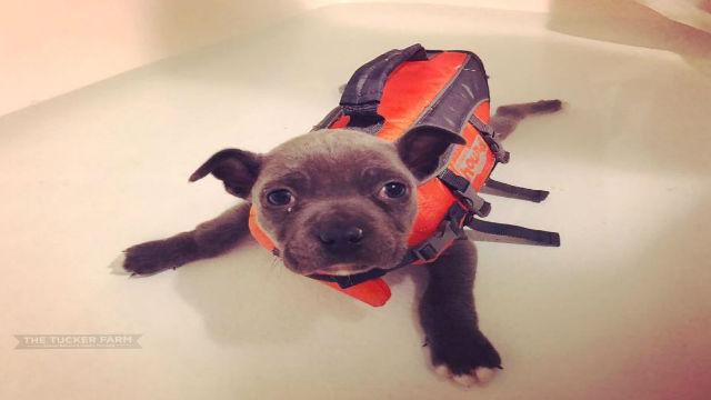 歩けないというだけで捨てられた子イヌ。立ち直り、まだまだ冒険を続けます!のアイキャッチ