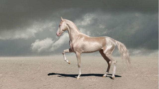 「世界で一番美しい馬」と評されるレアな馬のアイキャッチ