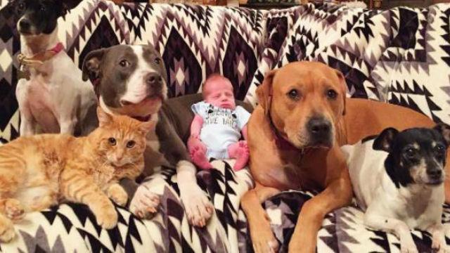 「飼い主さまに赤ちゃんが生まれたぞ!」大喜びで大歓迎する愉快なペットたちのアイキャッチ