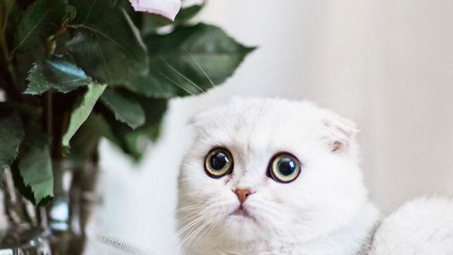なぜか悲しそうな子ネコ、インスタ上で大人気に!のアイキャッチ