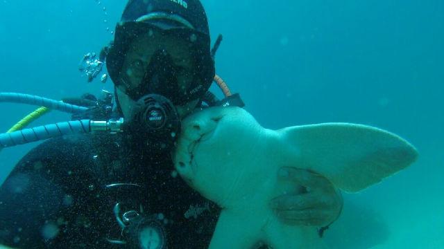驚きのサメとの友情!自らの姿で偏見を取り除くあるダイバーの物語のアイキャッチ
