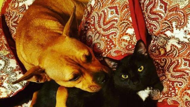 海外版『犬猿の仲』。イヌとネコって仲が悪いの?のアイキャッチ