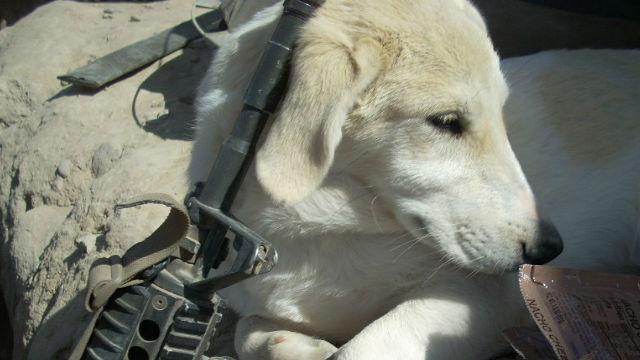 【感動!】アフガニスタンの戦場で結ばれた一人の兵士と犬の物語のアイキャッチ
