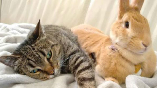 いつも一緒!ネコとウサギの仲良し姉妹に癒される!のアイキャッチ