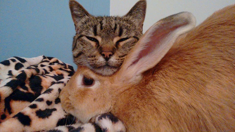 うさぎと猫12
