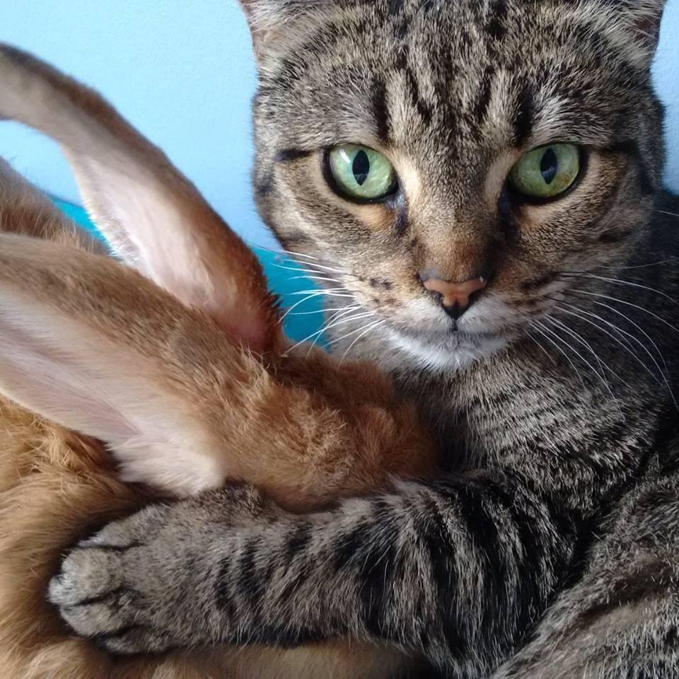 うさぎと猫13