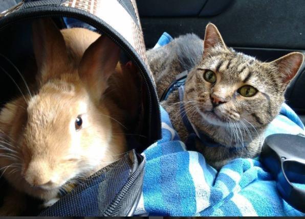 うさぎと猫7