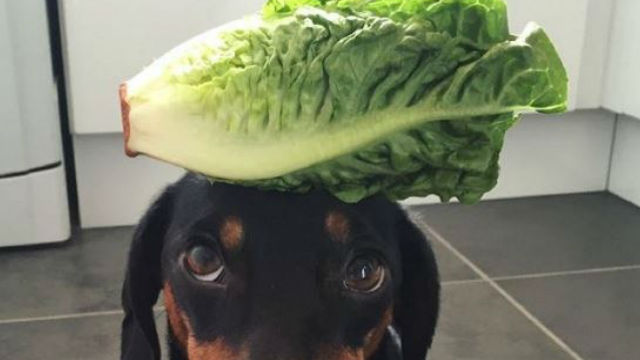たった一つしか芸ができない犬。しかし唯一できる芸が秀逸と大人気!のアイキャッチ