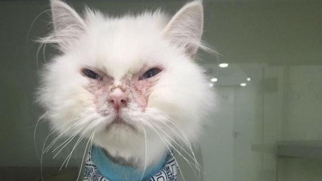 獣医師も「引き取る価値はない」と見放したネコ。奇跡的な回復を経て、愛らしい姿に!のアイキャッチ