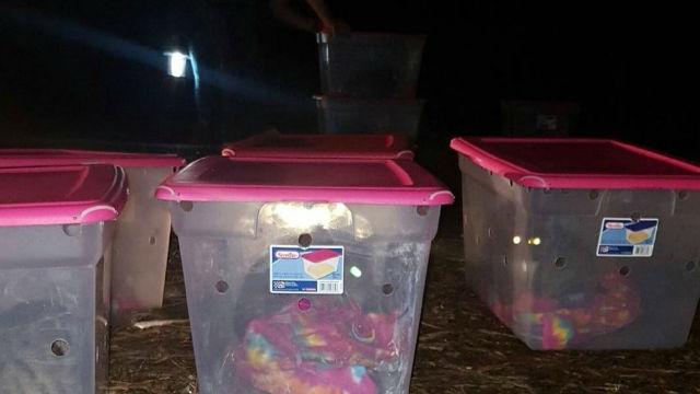 ショック!動物保護施設の外に14個の謎の容れ物!中には捨て猫が…のアイキャッチ