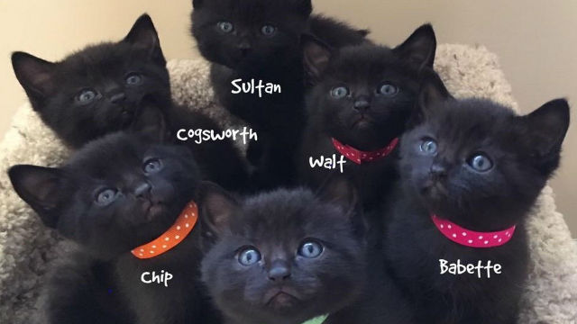 引越しする飼い主に置き去りにされた捨て猫。6匹の赤ちゃんが!のアイキャッチ