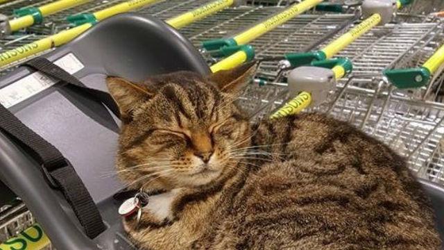 スーパーマーケットの看板猫。愛らしい仕事ぶりが讃えられ銅像に!のアイキャッチ