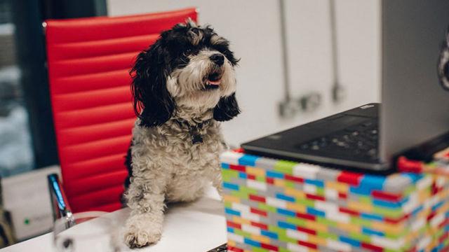 画期的!「犬と過ごすための有給休暇」を開始した、今をときめくビール会社のアイキャッチ