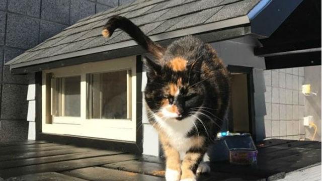 警察署にやって来たまま居ついてしまった猫。特別に猫豪邸を設置!のアイキャッチ