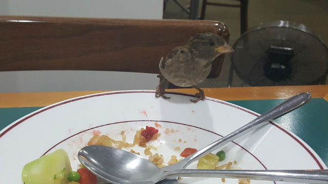 ランチ分けて♪毎日同じ人に昼食をもらいに来るスズメが可愛い!のアイキャッチ