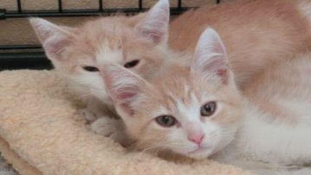 運命?!デートアプリで出会ったカップルの飼い猫は生き別れの双子の猫!!のアイキャッチ