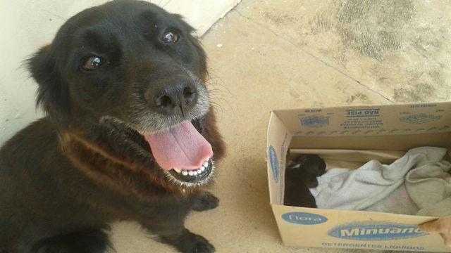 ゴミの山をあさっていた犬…実は捨てられた命を救っていた!のアイキャッチ