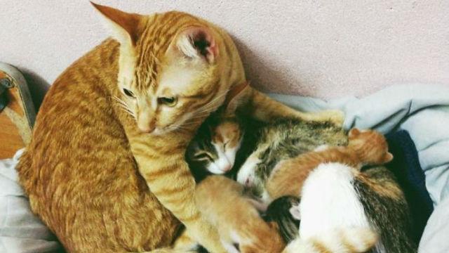 【父親のお手本、お見せします】献身的な父猫と生まれたての子猫たちが可愛すぎると話題に!のアイキャッチ