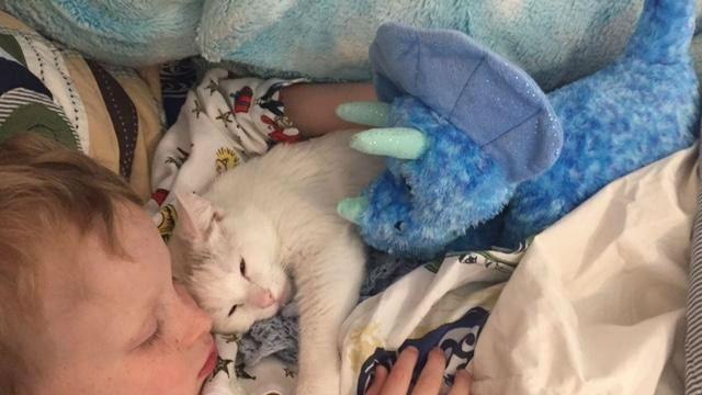 赤ちゃんを亡くしてしまった猫が見つけた、愛情を注げる存在とは…?のアイキャッチ