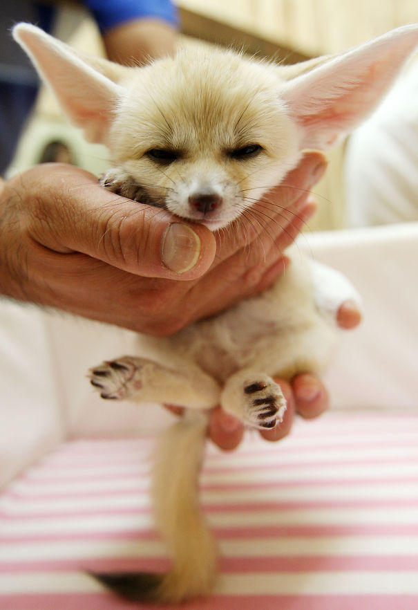 cute-baby-animals-palms-hands-23__605