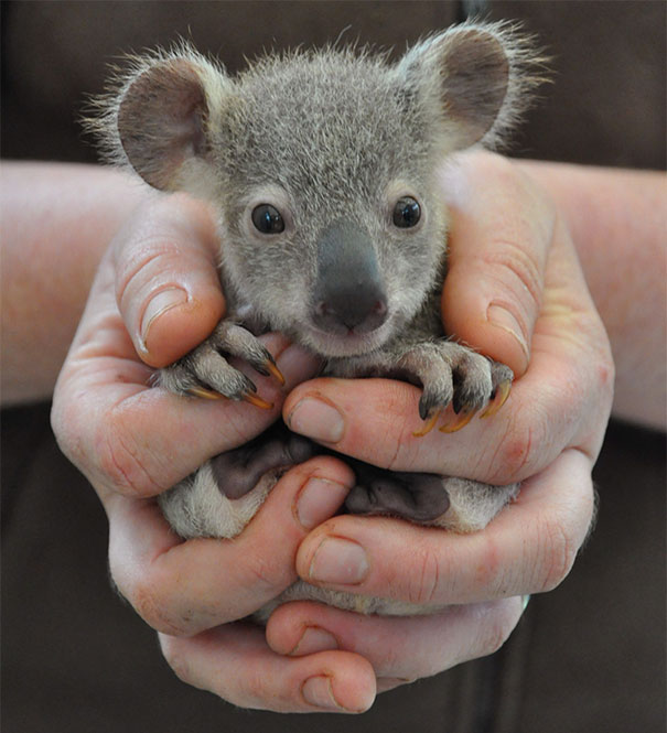cute-baby-animals-palms-hands-47__605