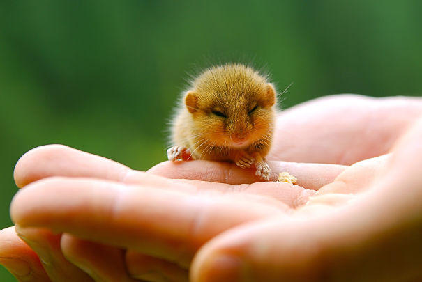 cute-baby-animals-palms-hands-52__605